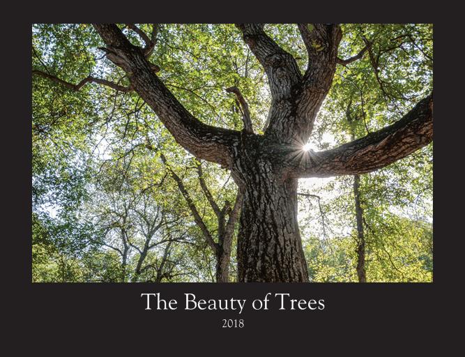 Beauty of Trees-2018 Calendar - by Gabriel Hemery