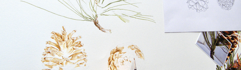 Jeffrey pine painting in progress by Nicola Macartney