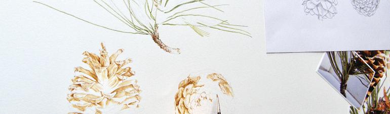 Jeffrey pine painting in progress by Nicola Macartney