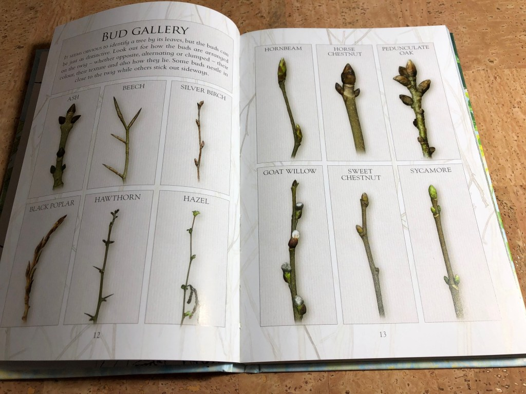 Winter buds from The Little Book of Trees