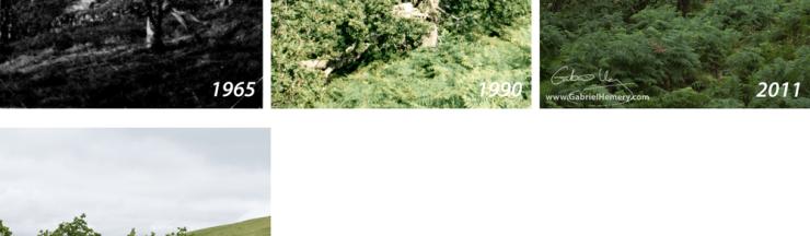Piles Copse, Tree 1, Gabriel Hemery