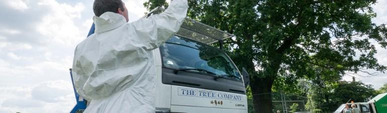 OPM oak tree under treatment attracts public interest