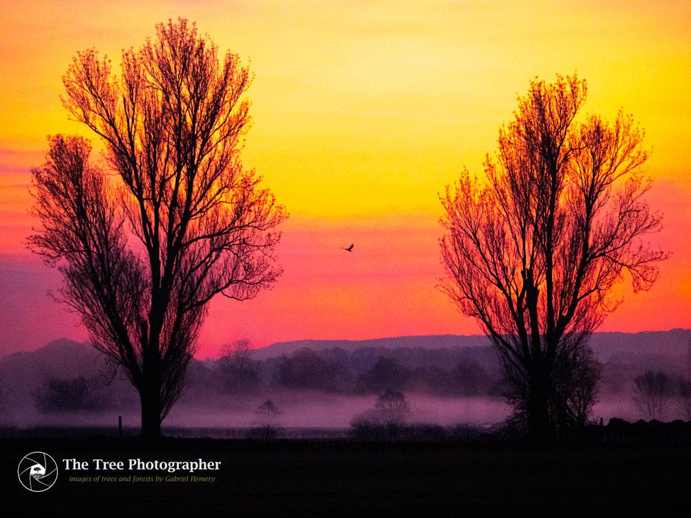 English Dawn by Gabriel Hemery