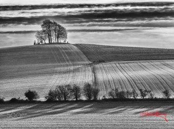 Trees by Gabriel Hemery