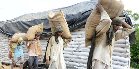 des-paysans-indiens-transportent-des-sacs-de_blé