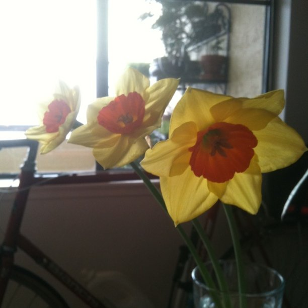 3 flowers from the balcony garden