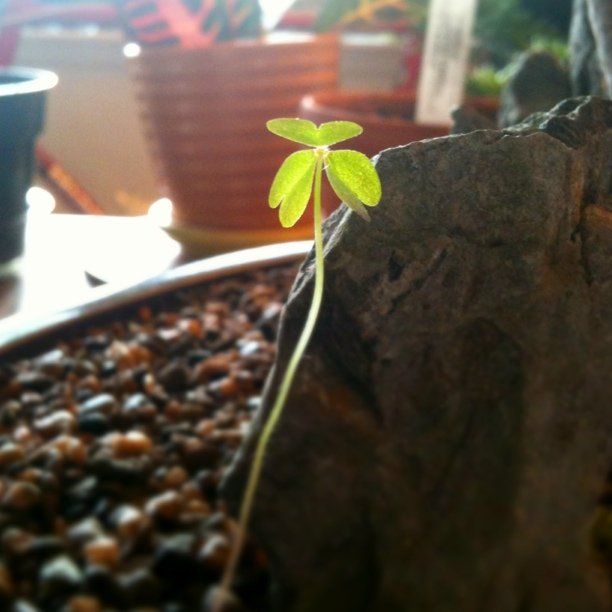 Beautiful sprout in the bonsai