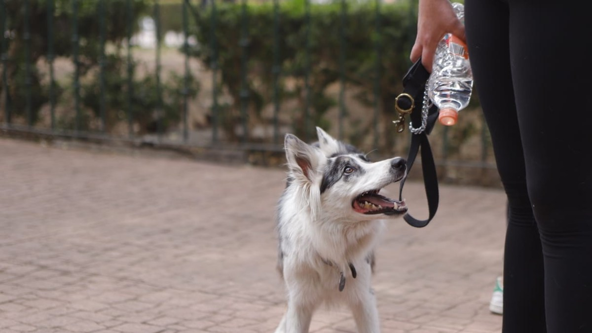 Programas Educativos deben contribuir a la prevención del maltrato animal: Diputada Gabriela Salido