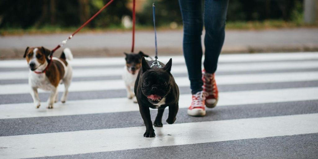 Gatos o perros, no son la única especie que debe tener un lugar en la sociedad; urge legislar por el cuidado de faunas integrales