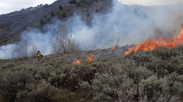 fire fighters burn sagebrush to help reduce the fuel load and reduce fire behavior in the event of a wildland fire