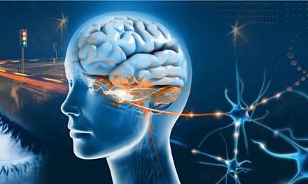 Estudian funciones cerebrales