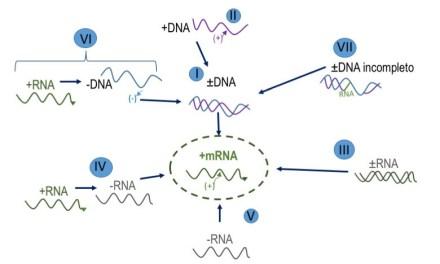 Genómica viral: una optativa aplicada a  la práctica médica