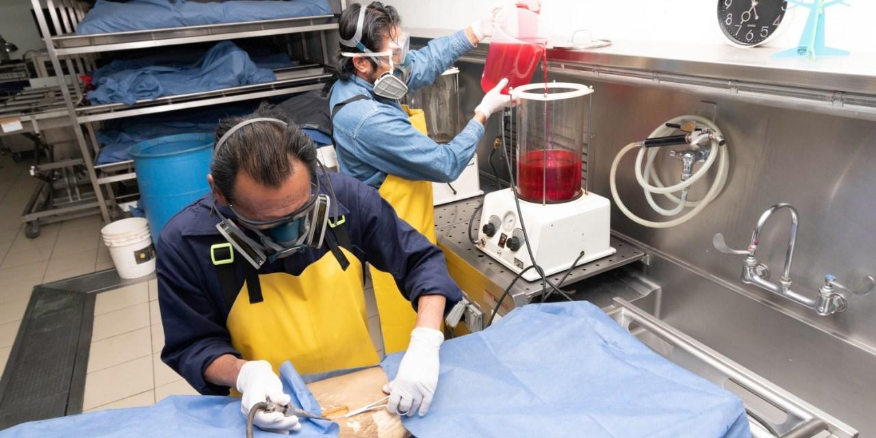 Nueva fórmula para preservar cadáveres en la Facultad de Medicina