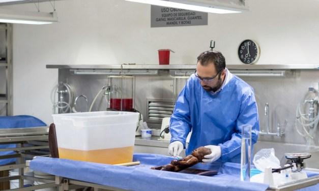 Técnica innovadora para rehidratar cuerpos momificados