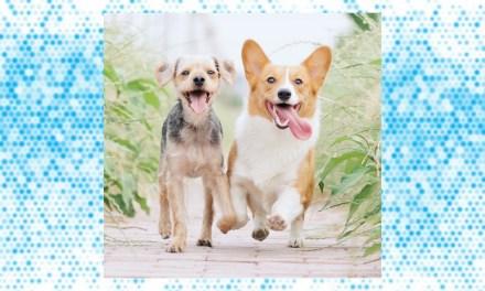 Mascotas y su relación con la COVID-19