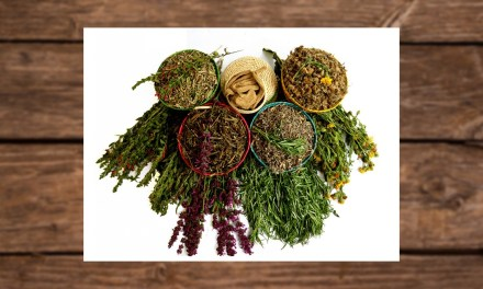 La herbolaria, medicina antigua y tradicional