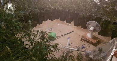 Intervenidas 208 plantas de marihuana en el sótano de una vivienda de Puente de Vallecas