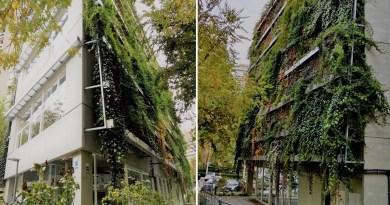 Dos fotos del Centro de Mayores donde se ve su fachada cubierta de plantas