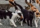 """Ciudadanos Barajas exige al gobierno de Ahora Madrid que """"apueste en serio"""" por las colonias felinas"""