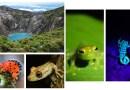 El Botánico acoge 'Pura Biodiversidad', una muestra fotográfica sobre la biodiversidad en Costa Rica