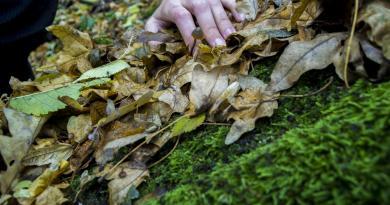 La Comunidad de Madrid recuerda la prohibición de recoger musgo, tejo o acebo en el campo