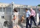 El PSOE reclama más recursos para descongestionar el Centro de Protección Animal de Madrid