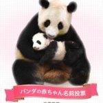 和歌山・アドベンチャーワールドの子パンダの名前公募締め切られました。