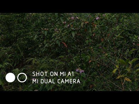 remove shot on mi a1