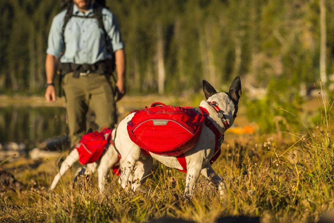 Ruffwear Dog Packs Gadget Flow