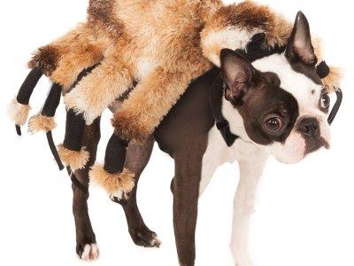 Hundekostüm Vogelspinne Vorschau