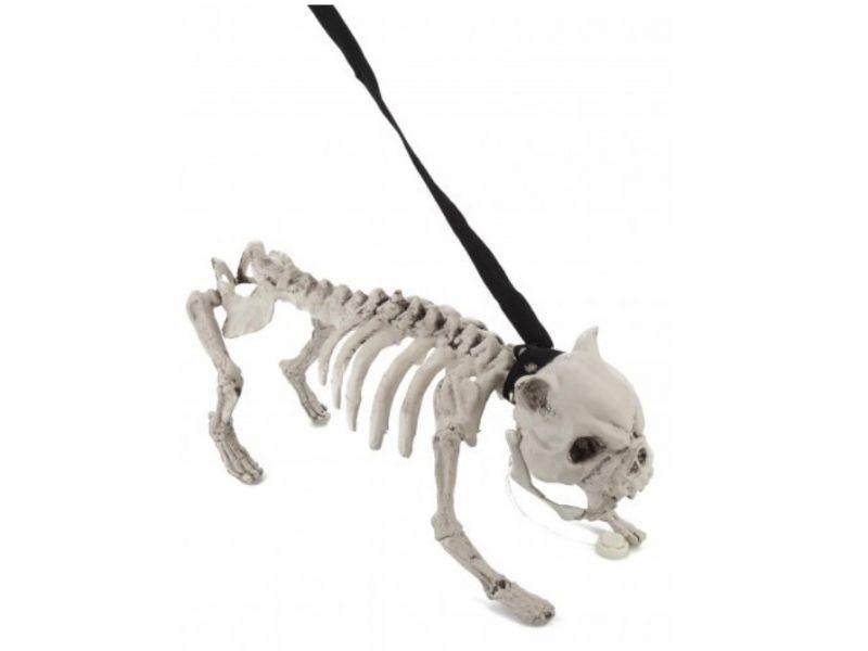 Skelett-Hund