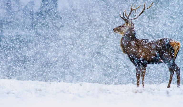 Design Your Christmas Greeting Cards with These Amazing Websites