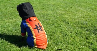 Prepare Your Dog For The Rites With New Pyre Hoodie - News