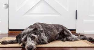 Dog-Training Doorbells : Mighty Paw