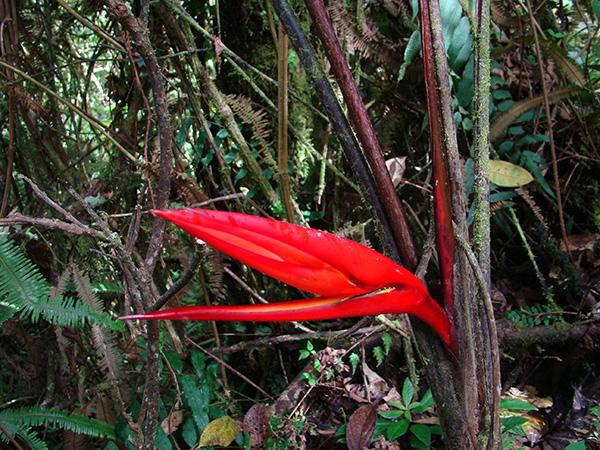 FLORA EN GUALAQUIZA