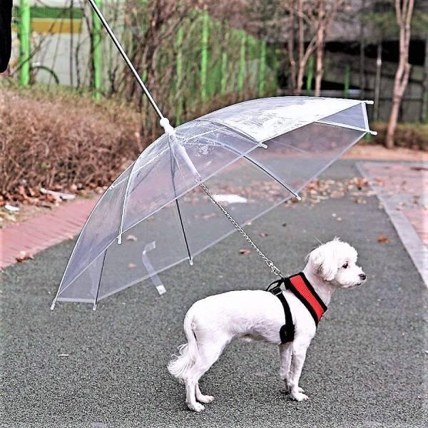 Umbrella For Pet
