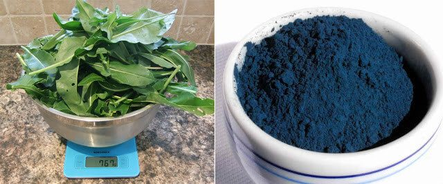 Woad leaves and dye from the Lovely Greens blog: https://lovelygreens.com/extracting-woada-natural-blue-pigment/