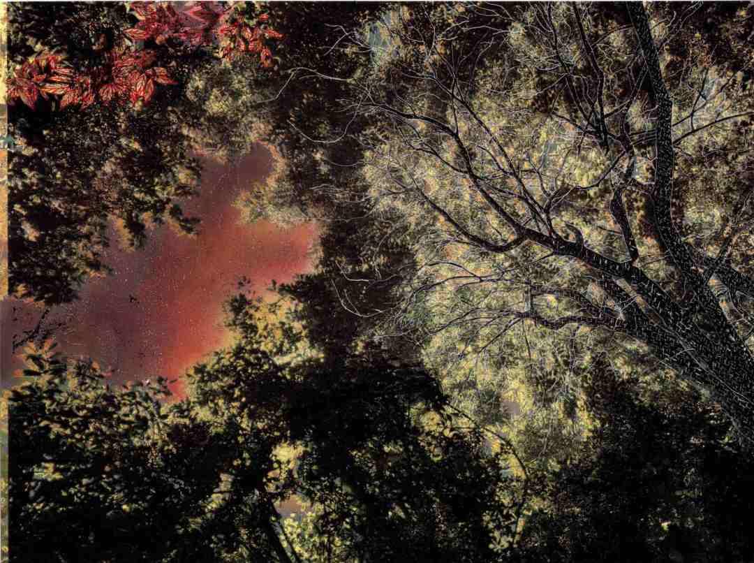 Vibrations de la forêt #15 - copie