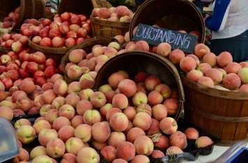 Larchmont Farmer's Market