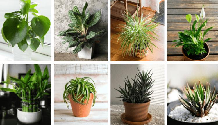 20 Plantes Parfaites Pour Salle De Bain Qui Poussent Avec Peu Pas De Lumiere