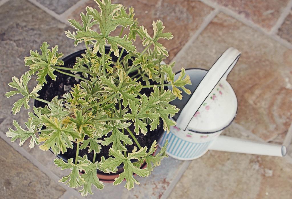 indoorplant