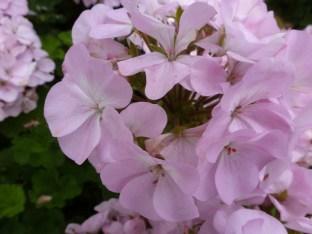 Blüte vergrößert