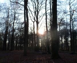 Wald im Sonnenlicht