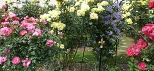Nochmals der wunderschöne Rosengarten