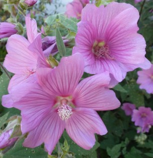 So wunderschöne Blüten