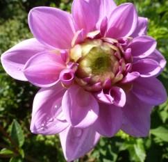 Die Blütenpracht