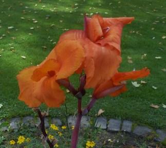 Lilienblüte im Kurpark von Bad Breisig