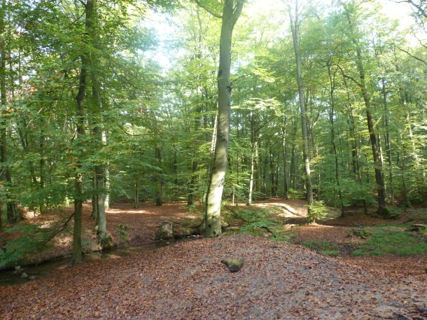 Saaler Mühlenwald