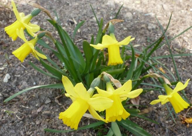 Oster Frühlingsglocken