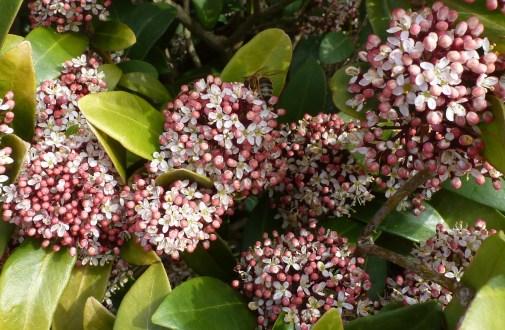 Herrlicher Blütenbusch